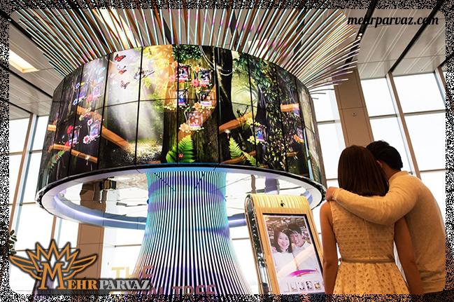 فرودگاه چانگی سنگاپور و درخت سوشیال