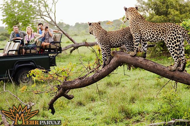 سفر به آفريقاي جنوبي