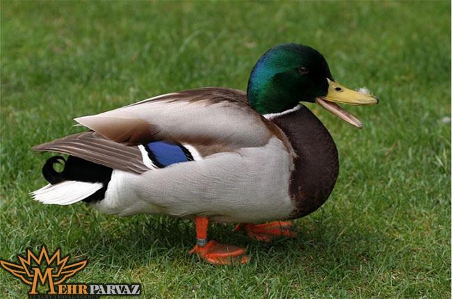 حمل اردك ممنوع